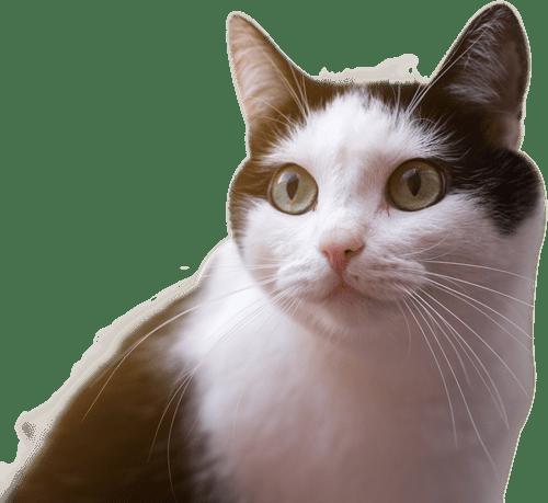 gato-hogar-min