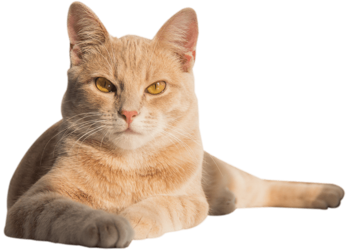 gato-hogar2-min